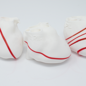 FOCUS Heart Modelsshowing standard imaging planes for FOCUS TTE Cardiac CT. FDM Print. Magnets