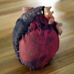 Normal Heart Cardiac CT. Powder-based print. Artificial colours.