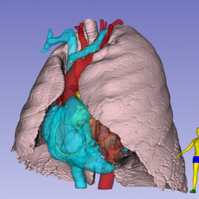 Rendering of lung and heart for teaching TTE anatomy